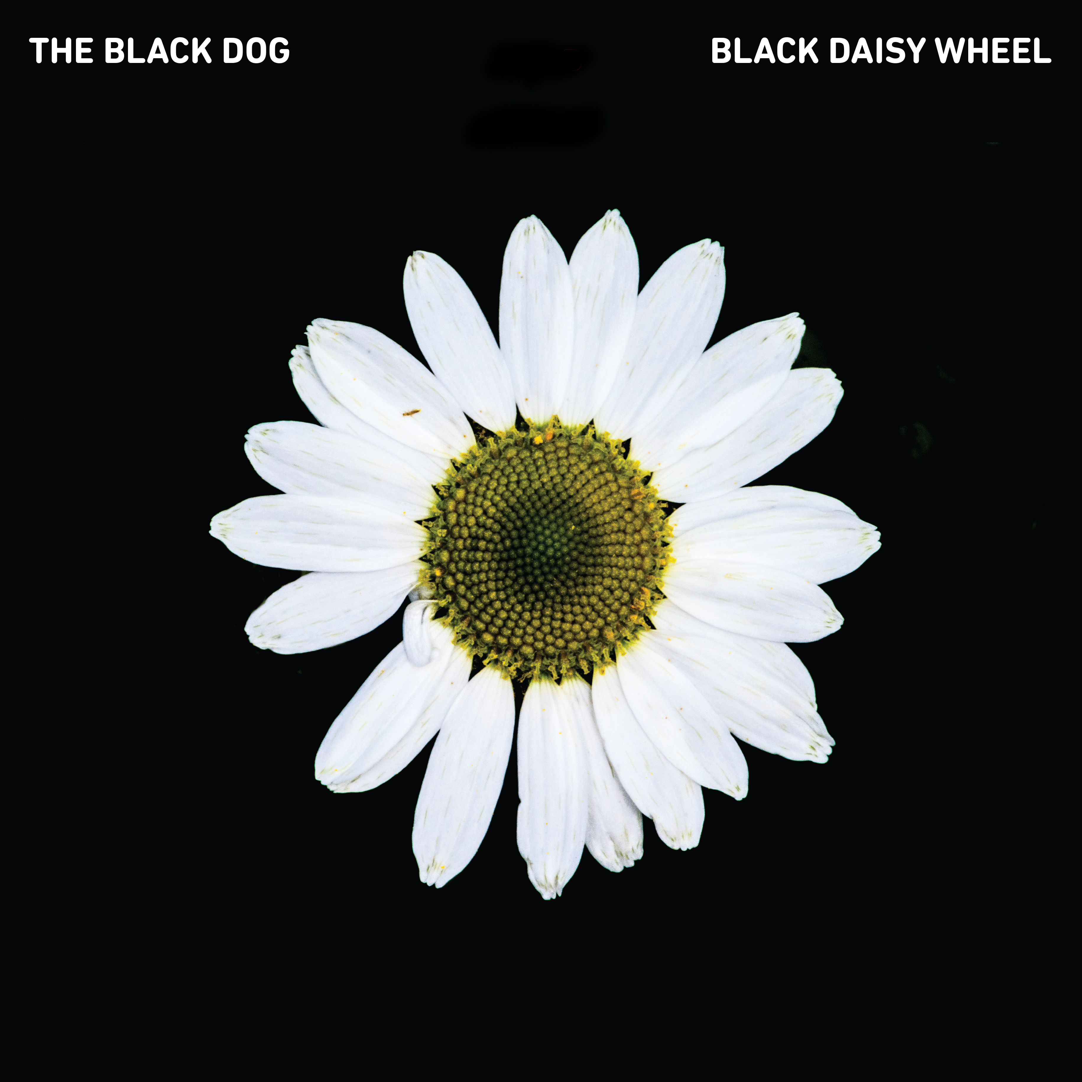 The Black Dog - Post-Truth / Black Daisy Wheel