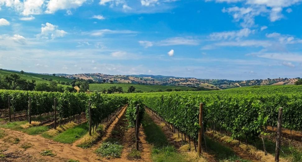 There's a rave on an Italian vineyard this summer, 53100